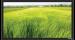 Цены на Экран Vutec ELEGANTE Fixed 198*351 MatteWhite Особенности: Превосходное качество по умеренной цене Рама 4 см в ширину Абсолютно плоское состояние полотна Прочный легкий алюминиевый корпус Черное бархатное покрытие рамы Настенный крепеж в комплекте Полотна