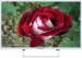 "Цены на SHIVAKI SHIVAKI STV - 50LED13W ЖК - телевизор,   LED - подсветка диагональ 50"" (127 см) формат 1080p Full HD,   1920x1080 прием цифрового телевидения (DVB - T2) просмотр видео с USB - накопителей тип подсветки: Edge LED три HDMI - входа"