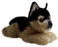 Фото Aurora Немецкая овчарка щенок (61-854)